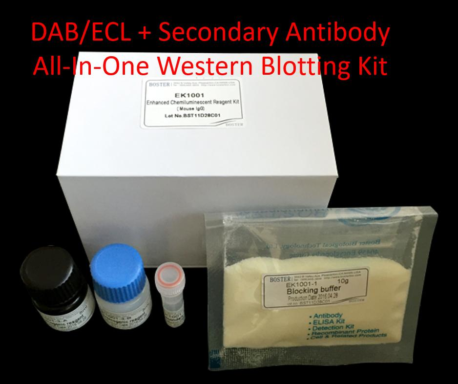 All-In-One Western Blot Kits