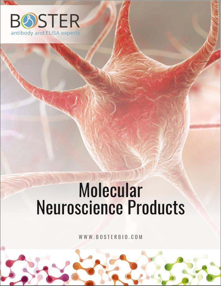 Boster Molecular Neuroscience Research Product Catalog