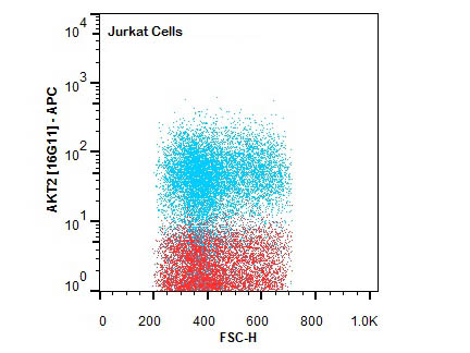 Flow Cytometry of Rat anti-AKT2 antibody.Cells:Jurkat Cells.Stimulation:none.Primary antibody:Allophycocyanin AKT2 antibody at 1.0