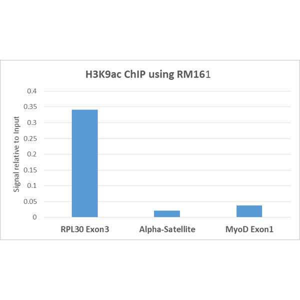 Figure 6. ChIP result<br>ChIP performed on HeLa cells using H3K9ac antibody (RM161, 5ug). Real-time PCR was performed using primers specific to the gene indicated.