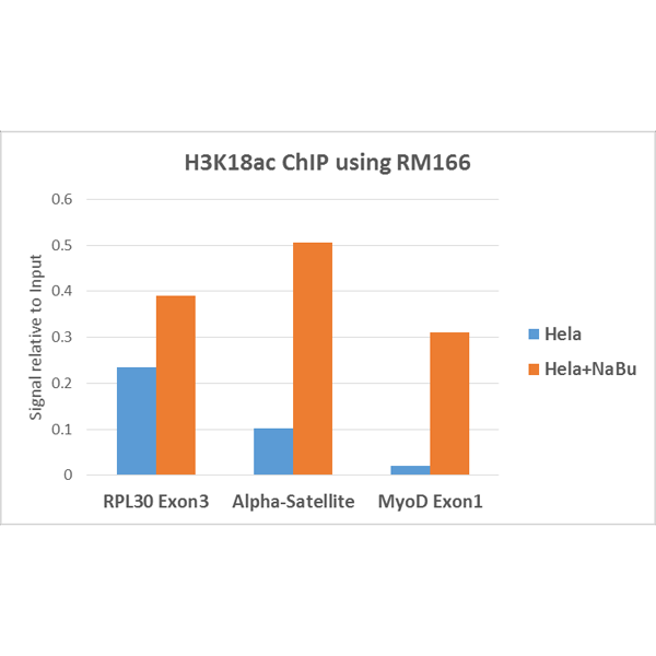 Figure 6. ChIP result<br>ChIP performed on HeLa cells with or without Sodium Butyrate treatment, using H3K18ac antibody (RM166, 5ug). Real-time PCR was performed using primers specific to the gene indicated.
