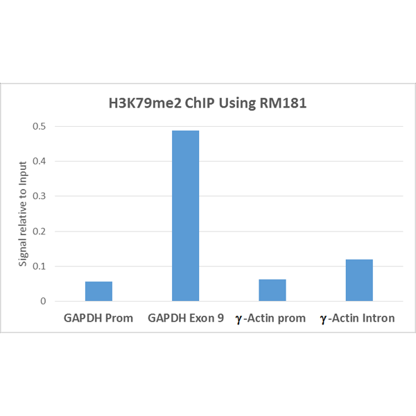 Figure 4. ChIP result<br>ChIP performed on HeLa cells using H3K79me2 antibody (RM181, 5ug). Real-time PCR was performed using primers specific to the gene indicated.