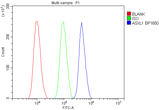 Figure 2. Flow Cytometry analysis of SiHa cells using anti-ASXL1 antibody (A01099-1). <br> Overlay histogram showing SiHa cells stained with A01099-1 (Blue line).The cells were blocked with 10% normal goat serum. And then incubated with rabbit anti-ASXL1 Antibody (A01099-1, 1μg/1x10<sup>6</sup> cells) for 30 min at 20°C. DyLight®488 conjugated goat anti-rabbit IgG (BA1127, 5-10μg/1x10<sup>6</sup> cells) was used as secondary antibody for 30 minutes at 20°C. Isotype control antibody (Green line) was rabbit IgG (1μg/1x10<sup>6</sup>) used under the same conditions. Unlabelled sample (Red line) was also used as a control.