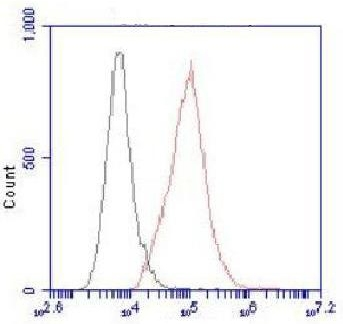 Flow cytometric (FCM) analysis of HeLa cells stained with ATP-citrate synthase Monoclonal antibody (red), followed by FITC-conjugated goat anti- Mouse IgG. Black line histogram represents the isotype control, normal Mouse IgG.