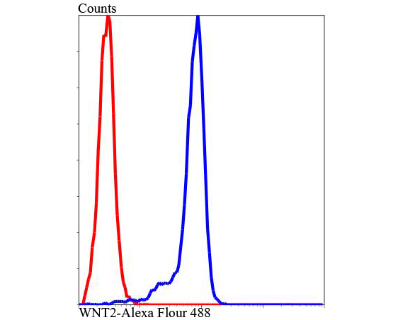<h4>Figure 2. Flow Cytometry validation of WNT2 using Anti-Protein Wnt-2 WNT2 Antibody (A03226).</h4> Flow cytometric analysis of Jurkat cells with WNT2 antibody at 1/100 dilution (blue) compared with an unlabelled control (cells without incubation with primary antibody; red). Alexa Fluor 488-conjugated Goat anti rabbit IgG was used as the secondary antibody.
