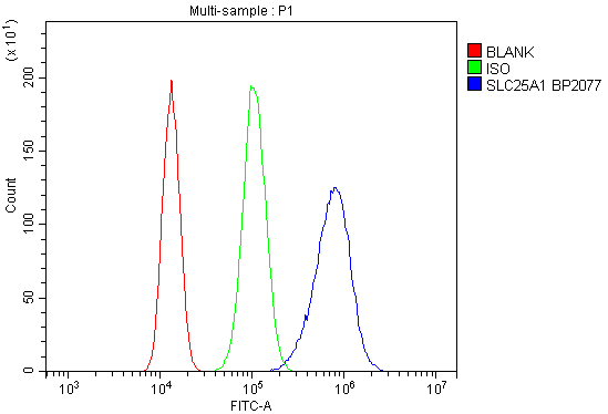 Figure 3. Flow Cytometry analysis of 293T cells using anti-SLC25A1 antibody (A05995-1). <br> Overlay histogram showing 293T cells stained with A05995-1 (Blue line).The cells were blocked with 10% normal goat serum. And then incubated with rabbit anti-SLC25A1 Antibody (A05995-1, 1μg/1x10<sup>6</sup> cells) for 30 min at 20°C. DyLight®488 conjugated goat anti-rabbit IgG (BA1127, 5-10μg/1x10<sup>6</sup> cells) was used as secondary antibody for 30 minutes at 20°C. Isotype control antibody (Green line) was rabbit IgG (1μg/1x10<sup>6</sup>) used under the same conditions. Unlabelled sample (Red line) was also used as a control.