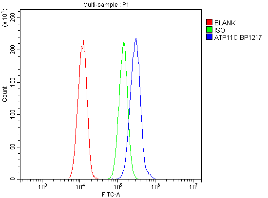 Figure 3. Flow Cytometry analysis of A549 cells using anti-ATP11C antibody (A06516-1). <br> Overlay histogram showing A549 cells stained with A06516-1 (Blue line).The cells were blocked with 10% normal goat serum. And then incubated with rabbit anti-ATP11C Antibody (A06516-1, 1μg/1x10<sup>6</sup> cells) for 30 min at 20°C. DyLight®488 conjugated goat anti-rabbit IgG (BA1127, 5-10μg/1x10<sup>6</sup> cells) was used as secondary antibody for 30 minutes at 20°C. Isotype control antibody (Green line) was rabbit IgG (1μg/1x10<sup>6</sup>) used under the same conditions. Unlabelled sample (Red line) was also used as a control.