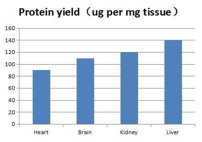 Figure 1.  Tissue cell lysis protein yield with Mammalian Tissue Protein Extraction Reagent<br> Mouse tissue proteins were extracted from different mouse tissues following the Mammalian Tissue Protein Extraction Reagent protocol. The protein concentration of each lysate was determined by BCA Protein Assay Kit (Product No. AR0146) to determine protein yield per milligram of starting tissue.