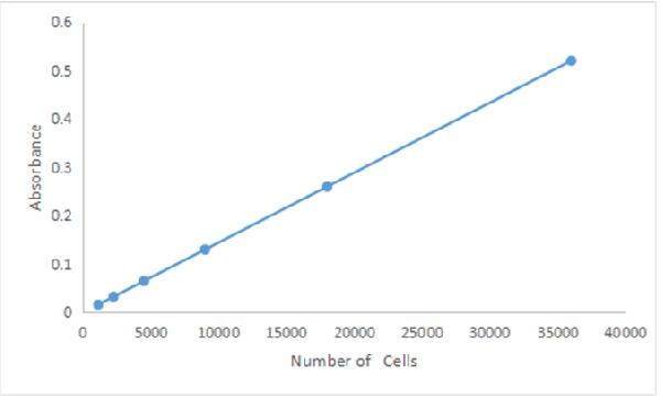 Quantitation of U937 cells using the MTT Cell Proliferation Assay Kit. Cells in the parent culture were counted in a hemacytometer and then diluted to the indicated cell numbers in 100 µL volumes, delivered to the wells of a microplate and incubated for 4 hours to allow time for adsorption before being assayed. Absorbance measurements at 570 nm were made using a microplate reader. Each data point represents the mean value of samples in triplicate.