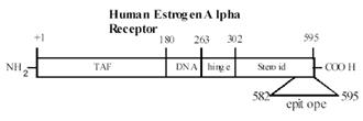 Human Estrogen Alpha Receptor domains.
