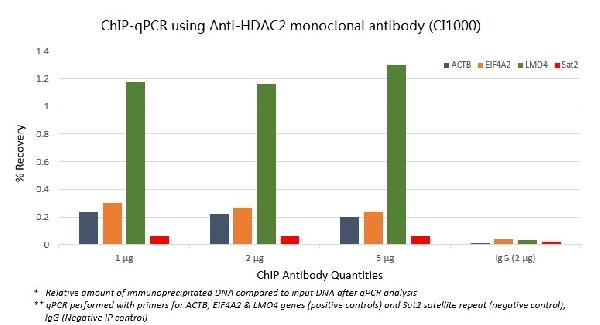 ChIP-qPCR data (% Recovery) with Anti-HDAC2 monoclonal antibody, optimized qPCR primers and sheared chromatin from 4 million human HeLa cells.