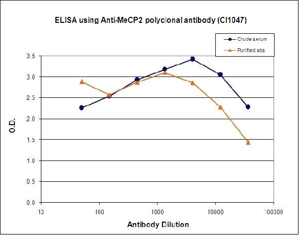 Anti-MeCP2/Methyl-CpG-binding protein 2 Antibody | ChIP