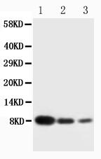 Anti-PF4 antibody, PA1446, Western blotting<br>Lane 1: Recombinant Human CXCL4 Protein 10ng<br>Lane 2: Recombinant Human CXCL4 Protein 5ng<br>Lane 3: Recombinant Human CXCL4 Protein 2.5ng