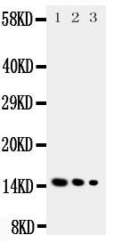 /antibody/pa1748-1-WB-anti-il-3-antibody.jpg