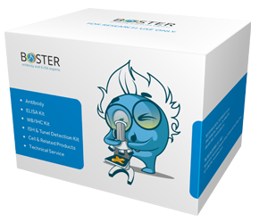 Boster Kit Box