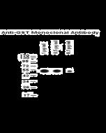 Anti-GST Tag Antibody (monoclonal, 5A7)