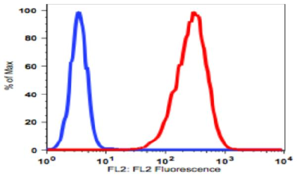 TF-1 cell lines stained with biotin conjugated <br> anti-human CD117 (clone BA7.3C.9) followed PE conjugated streptavidin (red histogram). TF- 1 cells stained with biotin conjugated mouse IgG2a isotype control followed by PE conjugated stretavidin(Blue histogram).