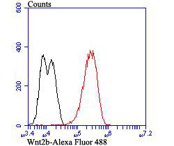 <h4>Figure 8. Flow Cytometry validation of WNT2B using Anti-Protein Wnt-2b Wnt2b Rabbit Monoclonal Antibody (M04879-1).</h4> Flow cytometric analysis of LOVO cells with Wnt2b antibody at 1/50 dilution (red) compared with an unlabelled control (cells without incubation with primary antibody; black). Alexa Fluor 488-conjugated goat anti-rabbit IgG was used as the secondary antibody.