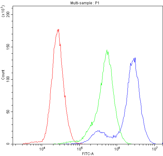 Figure 2. Flow Cytometry analysis of U-87 cells using anti-Factor I antibody (PB9935). <br>Overlay histogram showing U-87 cells stained with PB9935 (Blue line).The cells were blocked with 10% normal goat serum. And then incubated with rabbit anti-Factor I Antibody (PB9935,1μg/1x10<sup>6</sup> cells) for 30 min at 20°C. DyLight®488 conjugated goat anti-rabbit IgG (BA1127, 5-10μg/1x10<sup>6</sup> cells) was used as secondary antibody for 30 minutes at 20°C. Isotype control antibody (Green line) was rabbit IgG (1μg/1x10<sup>6</sup>) used under the same conditions. Unlabelled sample (Red line) was also used as a control.