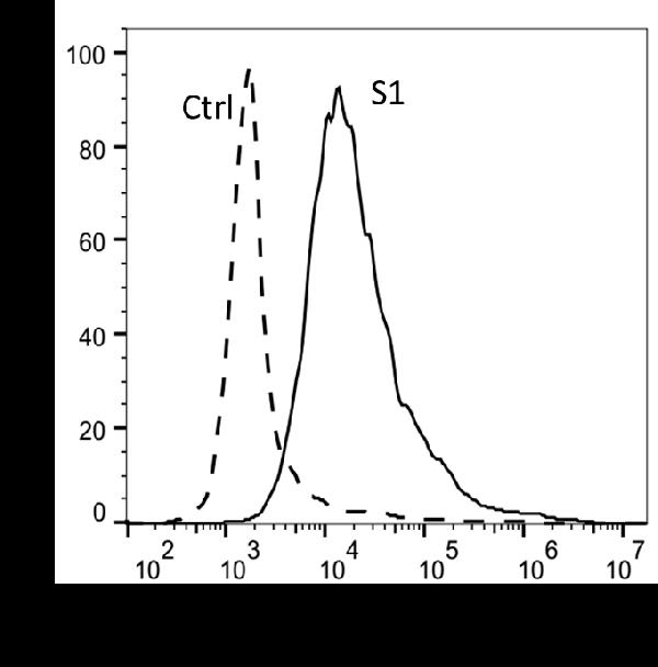 FACS assay showed 2019-nCoV Spike protein S1 can bind to ACE2 overexpressing cells. ACE2 overexpressing cells were stained with 2019-nCoV Spike protein S1, followed by anti-2019CoV Spike Protein antibody and fluorescence-conjugated  secondary antibody.