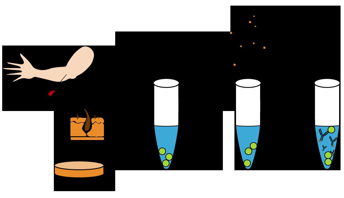 Flow antibody staining