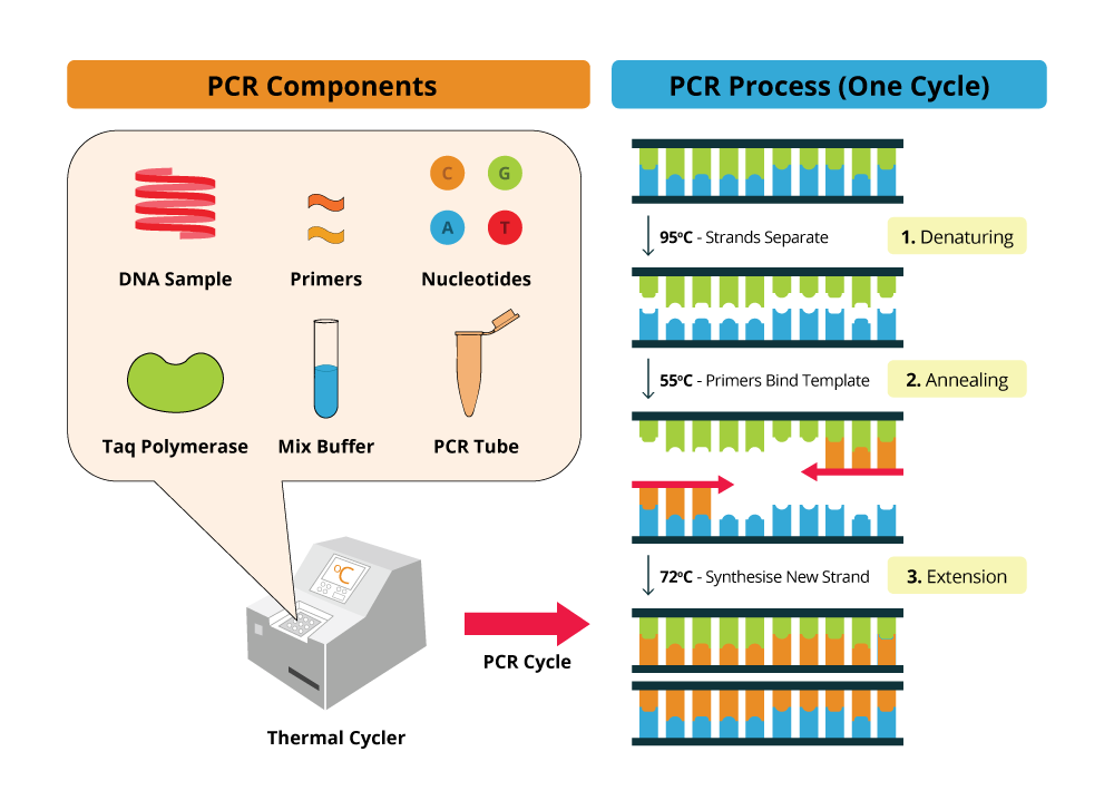 PCR components diagram