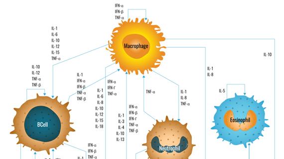 Cytokine Network Pathway