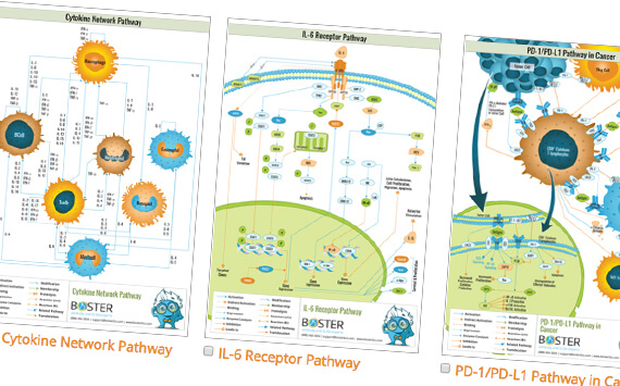 Request Top Poster Pathways