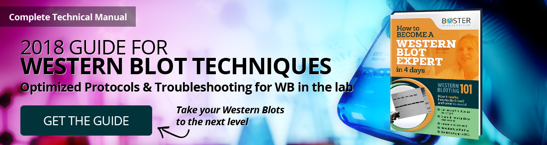 western blotting troubleshooting ebook guide download PDF