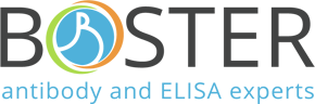 BosterBio | Antibodies, ELISA kits, Detection Kits