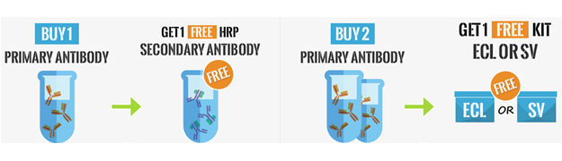 Free secondary antibody promotion BosterBio Products
