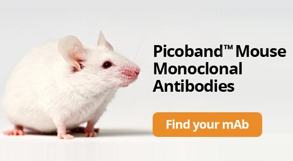 Picoband™ Mouse Monoclonal Antibodies